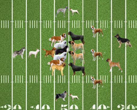 On a lighter note: What dogs would play which positions in football?