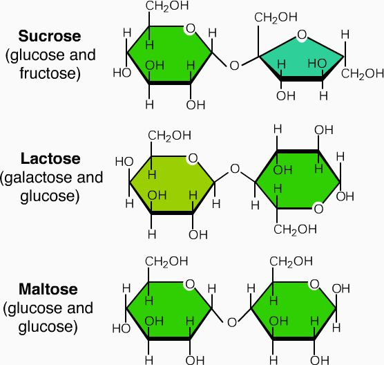 Disaccharides - Two mono units joined by glycosidic bonds. Sucrose (table sugar): 1Fructose+ 1Glucose. Lactose (milk sugar): 1Glucose + 1Galactose. Malstose (malt sugar): 2 Glucose.  All must be broken into monos before they can be synthesized.