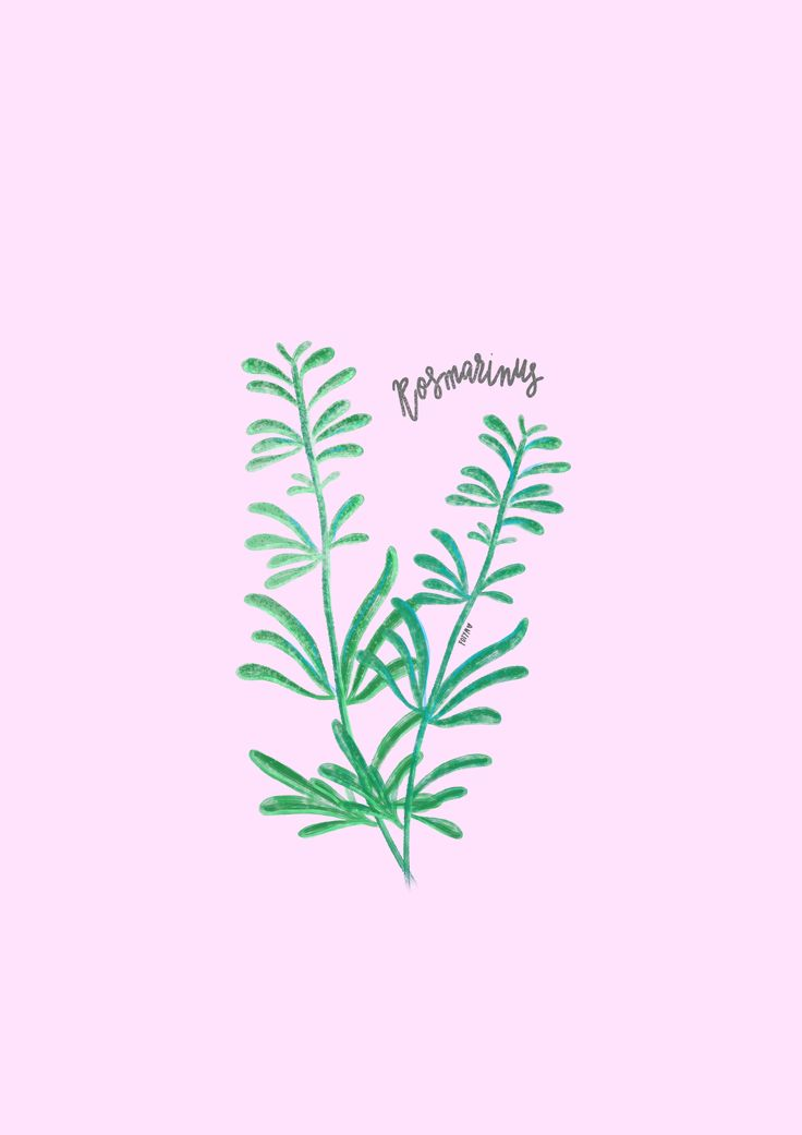 Simple illustration - Rosemary