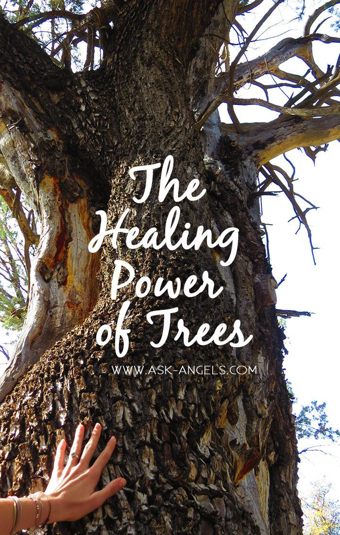 Mother Earth •~• The Healing Power of Trees