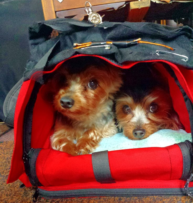 Small SturdiBag™ Pet Carrier