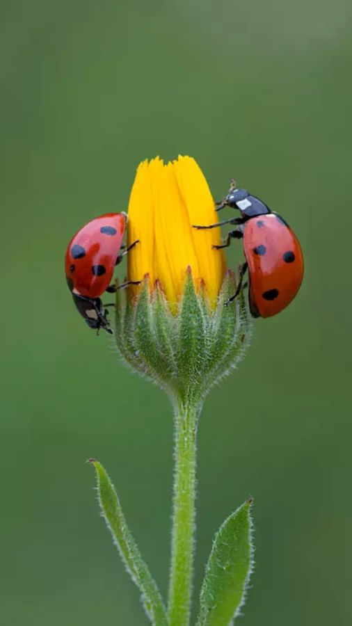 lady bugs bees flowers - photo #2