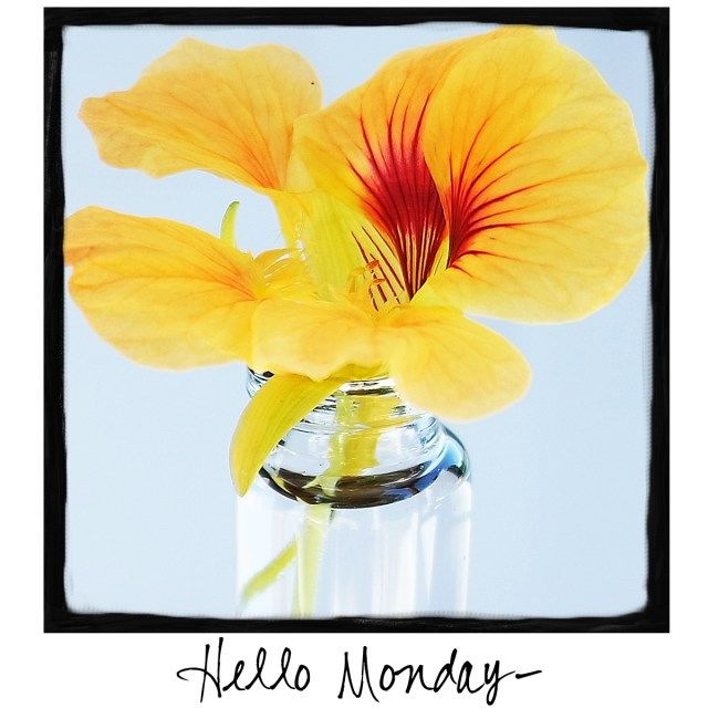 Hello Monday! Come check out A Warm Hello for a new photo to share each day of…
