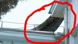 BIGGEST SNAKE EVER ! GIANT ANACONDA SNAKE Caught On Tape on a roof in RUSSIA!