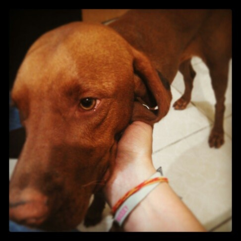 My vizla love