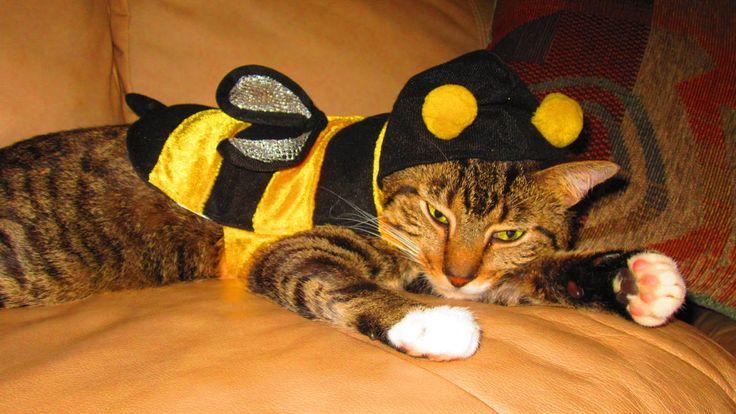Gatos disfrazados listos para celebrar Halloween y el Día Nacional del Gato (FOTOS)