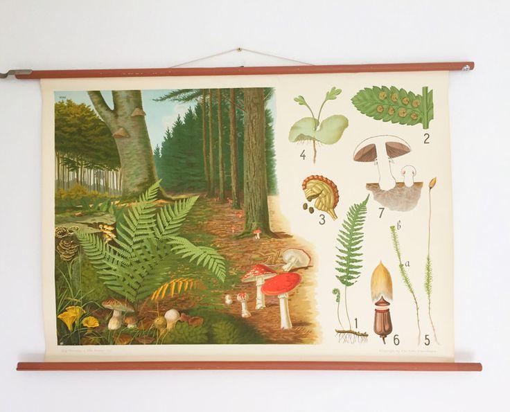Vintage Poster - Schöne alte Schulwandkarte: Sporenpflanzen Vintage - ein Designerstück von Troedelherz bei DaWanda