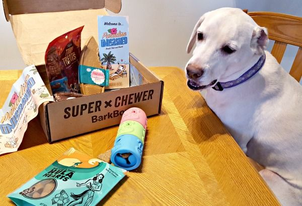 Super Chewer Barkbox Review February 2018 Outdoor Dog Toys Dog