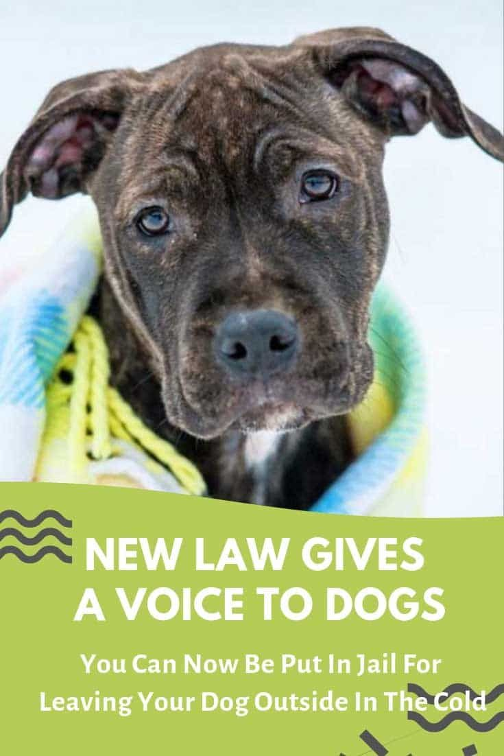 New Law Gives A Voice To Dogs You Can Now Be Put In Jail For