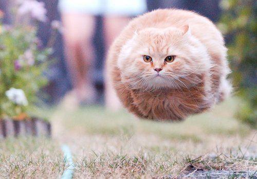 Running so fast...Hovercat