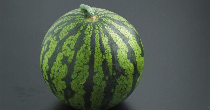 Tamanho do vaso para cultivar melancias. Se você gosta uma melancia refrescante e suculenta em um dia quente de verão, não desista se não tiver um jardim grande. Com um vaso do tamanho certo e um pouco de atenção, a melancia é uma planta viável para uma varanda ou deque. O cultivo em vasos é uma boa opção não só para os jardineiros sem espaço, mas também para quem tem um solo pobre.