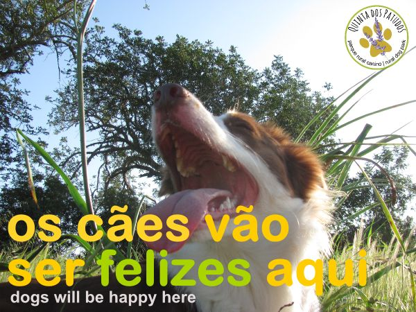 Os cães vão ser felizes aqui | Dogs will be happy here