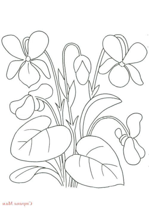 fialky sk.pinterest.com | Цветочные раскраски, Цветочная ...