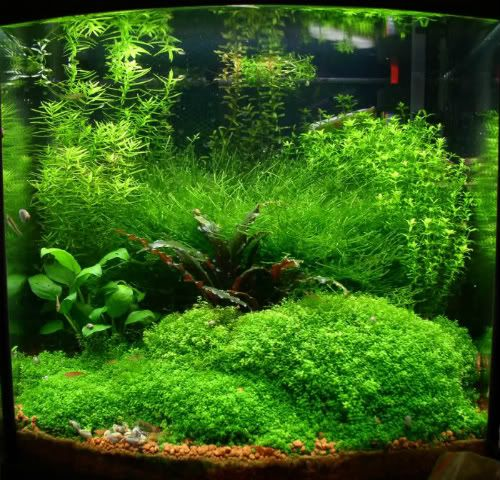408 best images about aquascaping on pinterest fish for Dustins fish tanks