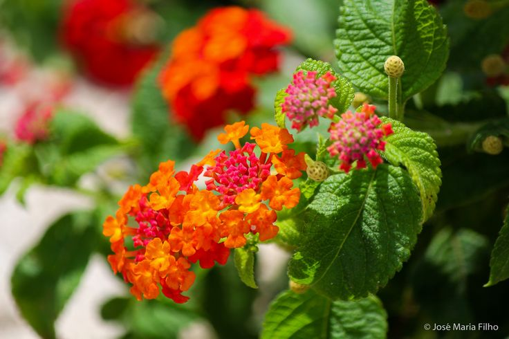 Orange Pink | por jmfilho
