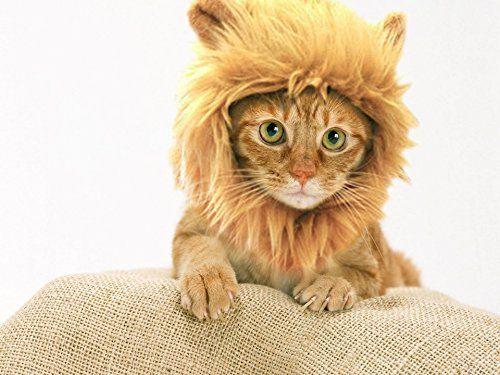 #RLWDDogCostumes: Lion Mane hat, Halloween Cat Costume. This Pet Costume turns your Pet Into a Ferocious Lion. View details at http://realifewebdesigns.com/web-store/details/?B00PE35AK8