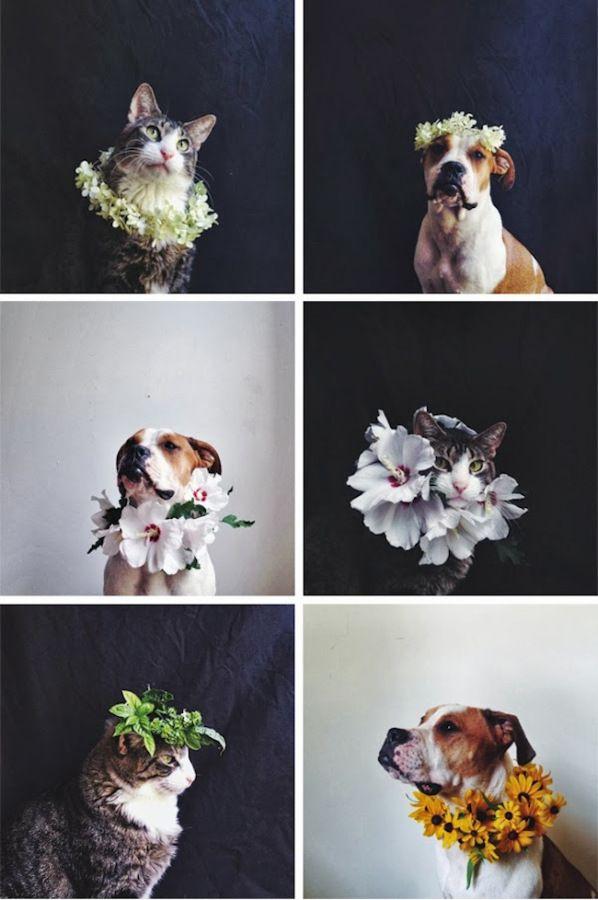 ariele alasko, floral pet portraits