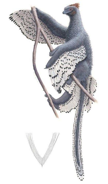 Hubo dinosaurios con plumas con aspecto de peluches