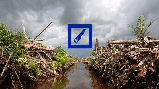 Indonesia Deutsche Bank finances deforestation Deutsche