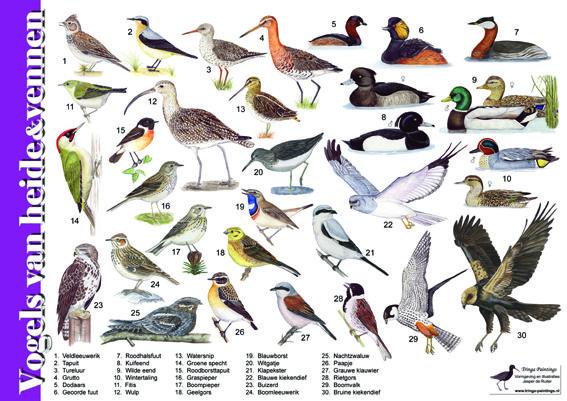 Herkenningskaart / zoekkaart Vogels van heide en vennen