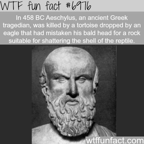 WTF Facts : funny, interesting & weird facts http://imgzu.com/image/ea8h0x