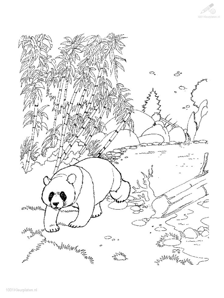 48 best images about coloring pages on dovers
