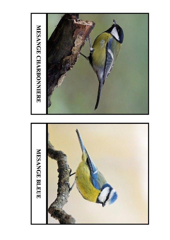 Imagier des oiseaux de chez nous - Page 1