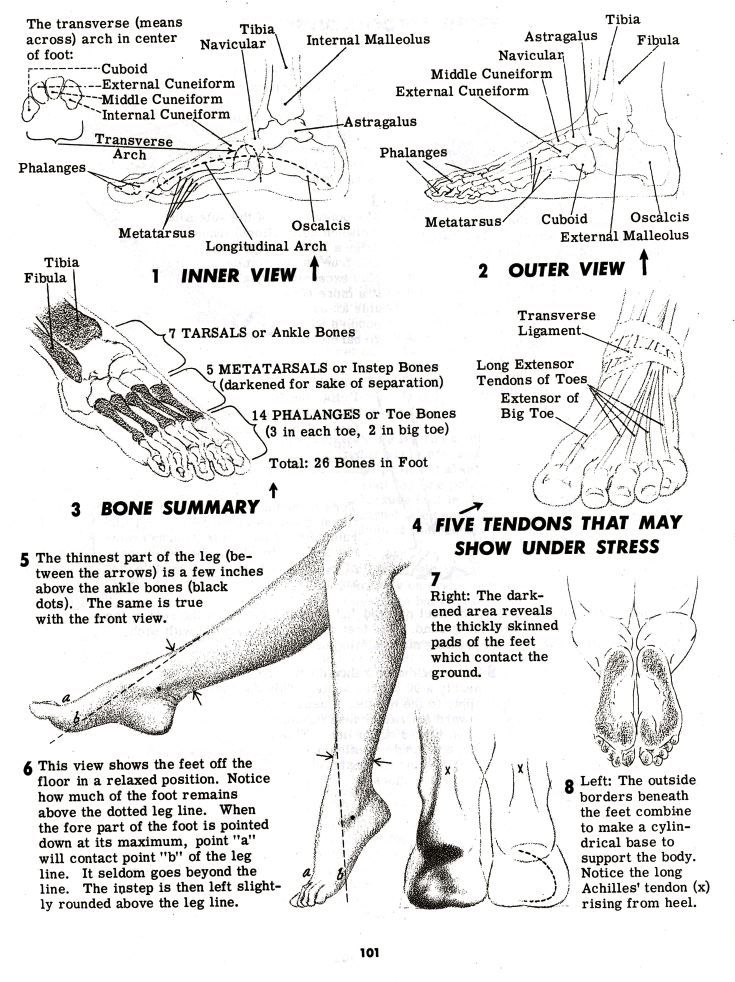 Best 100+ Feet and Legs images on Pinterest | Legs, Anatomy drawing ...