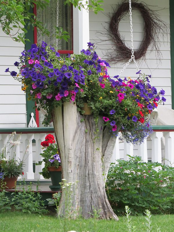 Tree Stump Planter with petunias and lobelias