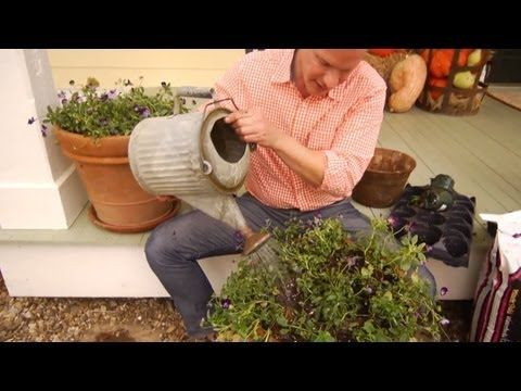 Learn How to Plant Tulip Bulbs in Containers - Garden Lovers Club