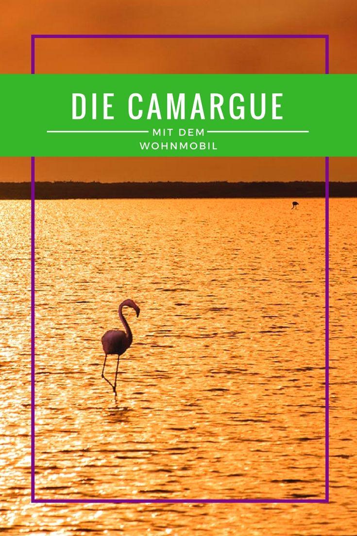 Die Camargue - weiße Pferde, wilde Stiere und zauberhafte Flamingos! Du willst die Camargue mit dem Wohnmobil entdecken? Lass Dich hier inspirieren