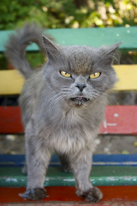 100 best images about Annoyed Cats: Funny Faces on ...