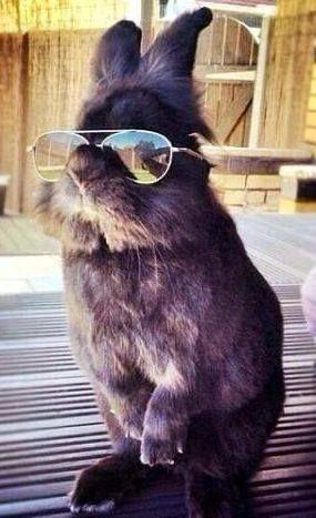 Auch Kaninchen haben Swag