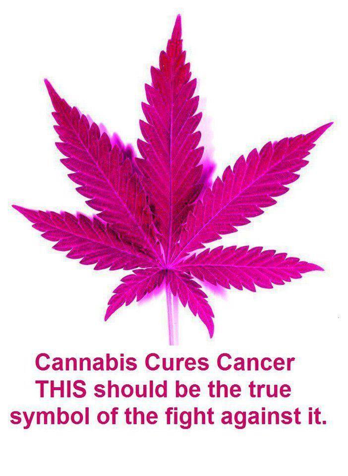 Cannabis, marijuana, weed, hemp, pot, Kills tumors dead, Cures Cancer, Tell Susan Kormen We Found A Cure!