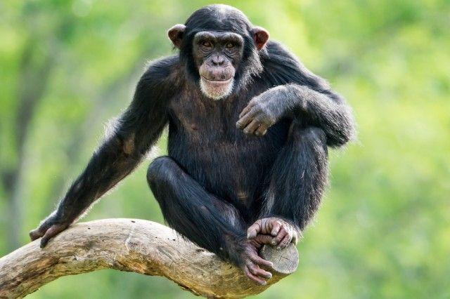 Animali che rischiano l'estinzione, più della metà delle specie sono in pericolo (foto)