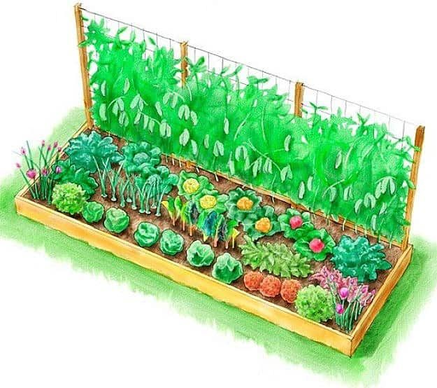 how to plan vegetable garden raised melbourne