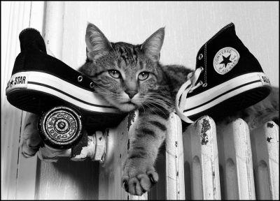 Converse Cat - Mon chat,  - Votre meilleure photo noir et blanc