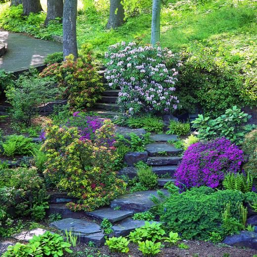 In the spring this garden has: snowdrops, snowflakes, crocus, squills, and glory-of-the-snow.  In summer:  hosta, yellow ligularia sibirica, red cardinal flower, big blue lobelia, white heuchera villosa, and blue clematis.