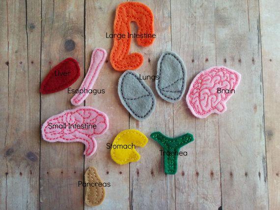 25 best organos cuerpo humano ideas on pinterest cuerpo for En k parte del cuerpo estan los rinones