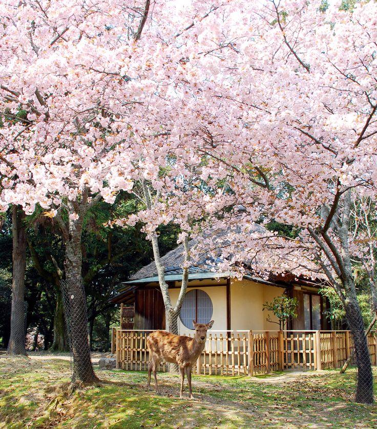 奈良公園内に点在する離れの宿。鹿がお部屋のすぐ横まで来ることもよくあります。創業は明治40年。お食事だけのご利用も好評を頂いております。 江戸三。奈良市。奈良エリア。宿泊施設。温泉・宿泊。奈良県観光公式サイト「あをによし なら旅ネット」(旧大和路アーカイブ)あおによし なら旅ネット。奈良大和路への旅に役立つ観光情報満載!伝統行事をはじめ、神社仏閣の秘宝・秘仏の特別公開などのイベント、観光名所、観光モデルコース、ガイドツアー、宿泊温泉、グルメお土産などのおすすめ情報がご覧いただけます。