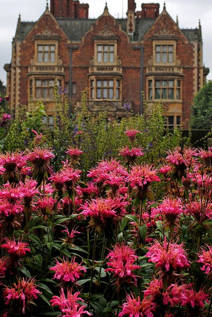 Gardens at Sandringham House - Norfolk, England (beautiful monarda didyma)