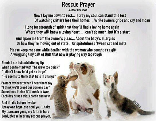 Rescued pets are the sweetest, most caring animals in the world!! Please------Rescue an animal rather than buying one!!!