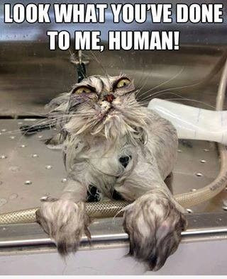 Human..   Cat Meme    only those who have bathed a cat can truly appreciate this