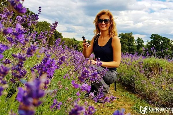 curiouskatsadventureclub Lavender season is finally here! Who is up to join our Lavender Farm Hike this Sunday? Great company guaranteed! #mayfieldfarm #lavender #lavenderfarmhike #hikingandhappiness #hike #summerhike #ukhikes #whynottohike #summeractivities #walk #walking #group #chillin #chipstead #mayfieldlavender #prettygirls #joinus #club #londonclub