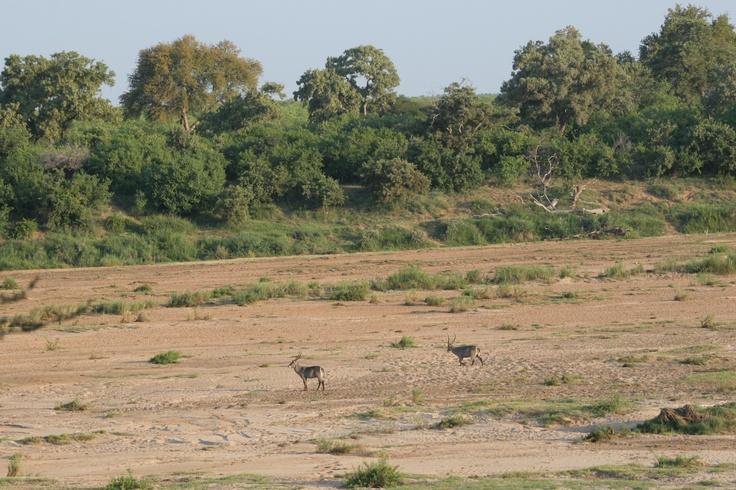 Kruger National Park is on our doorstep