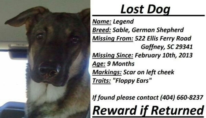 From craigslist- Lost sable german shepherd by the name of ...