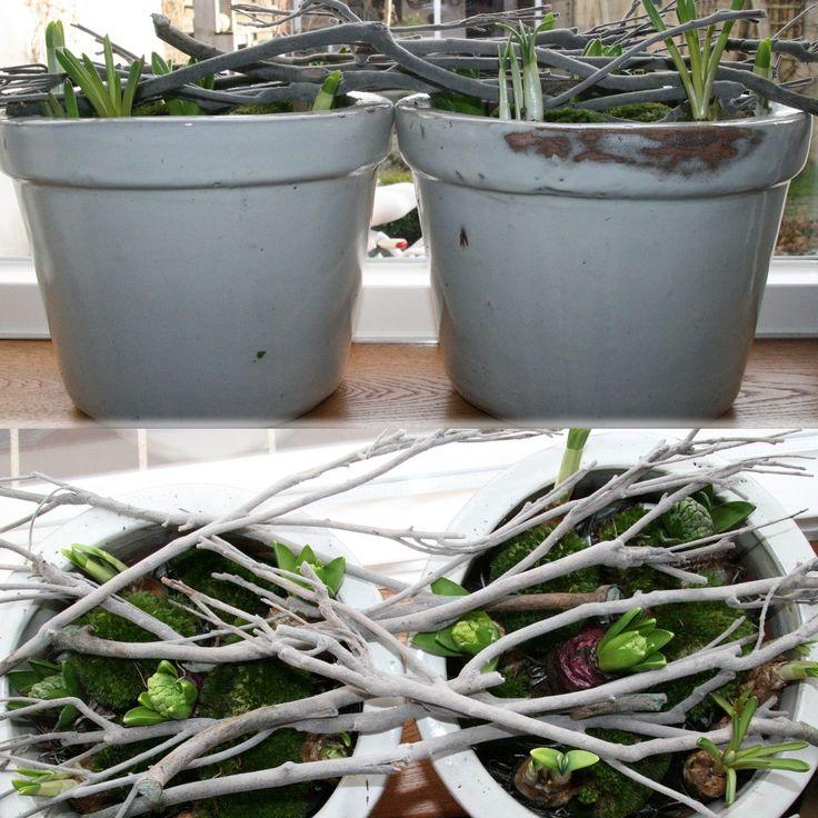 Hyacintenbollen, narcissenbolletjes en blauwe druifjes. In een paar potten (onderin opgevuld met kranten) wat mos er overheen en afmaken met wat takken. Voorjaar!