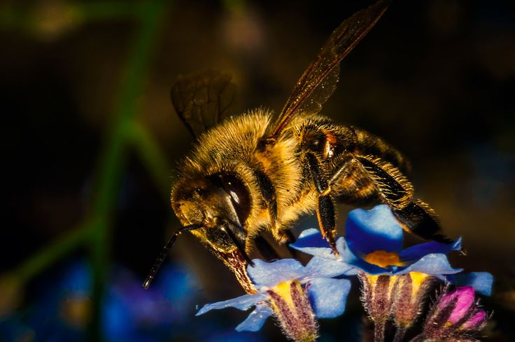 bee 3 - bee