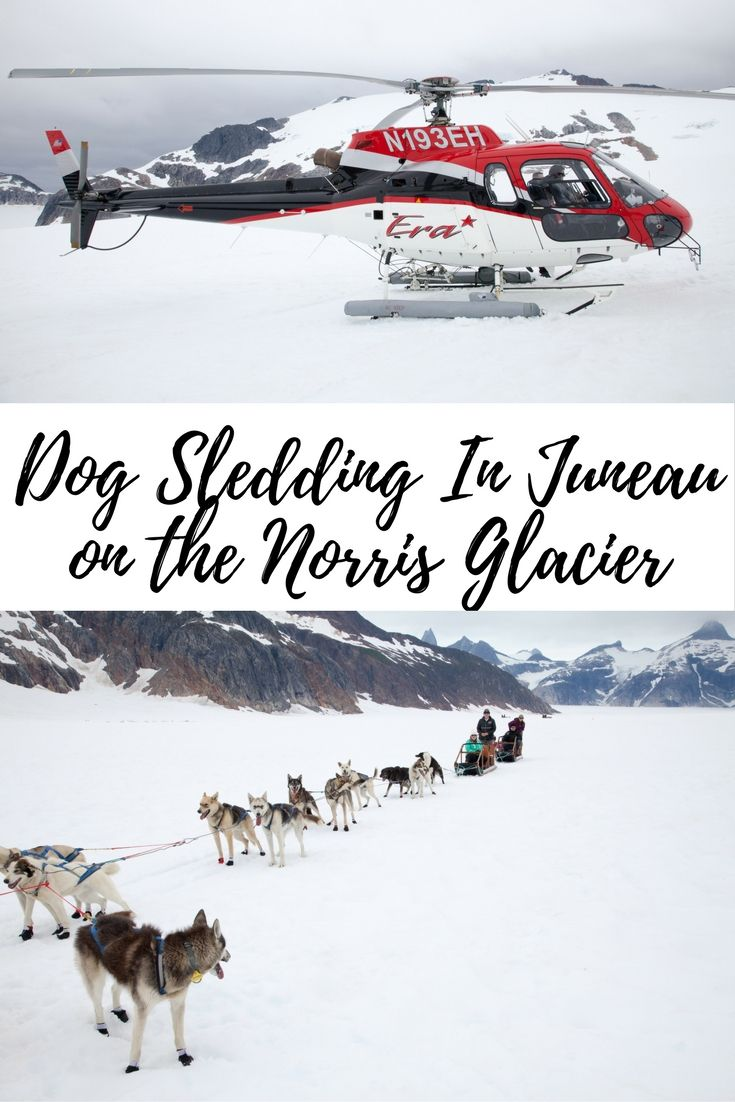 Dog Sledding In Juneau On The Norris Glacier   Alaska   Travel with Kids   Family Travel