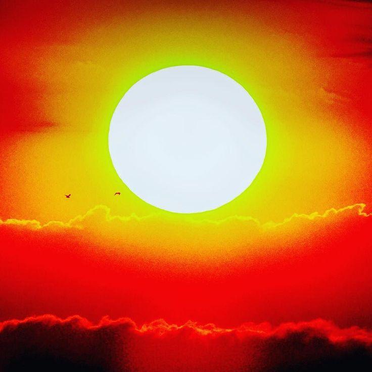Domenica sera tramonto da Montenero con gabbiani lontanissimi!  #instalike #instalife #instamoment #fotografia #photography #fotografi_italiani #l4l #like4like #likeforlike #tuscanygram #tuscany #toscana #sun #sunshine #sky #livorno #gabbiano #seagull #photography #photooftheday #photographer